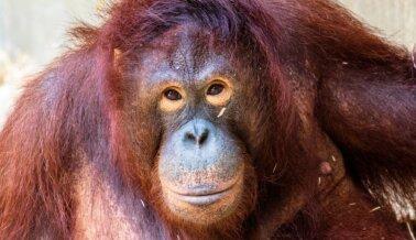 Primates Sufren en un Santuario Falso, ¡Actúa Ya!