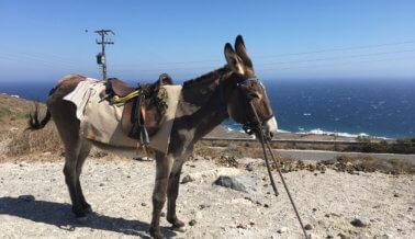 El Sufrimiento No se Detiene: ¡Prohíban los Paseos en Asnos en Santorini!