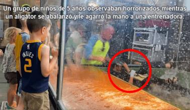 Exige a la Instalación del Video Viral de la Mordedura de Aligátor que Cierre su Zoológico Interactivo