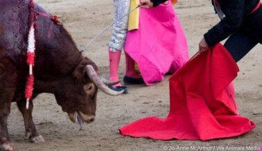 Los artistas crean, los toreros matan