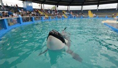 Ayuda a que Lolita y las Orcas en Marineland Antibes