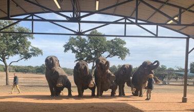 Dos Elefantes Muertos con Meses de Diferencia, ¡Ayuda a Otros Ahora!