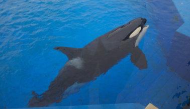 Insta a Este Club de Beneficios de L.A. a Dejar de Apoyar a SeaWorld