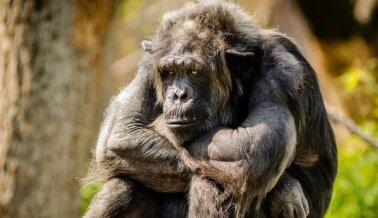 ¡Los Zoológicos de Carretera son Prisiones de Animales!