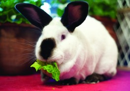 São Paulo Says, 'No More!' to Cruel Cosmetics Tests on Animals