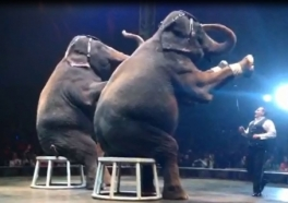 Got 30 Seconds? See What's Wrong With UniverSoul Circus