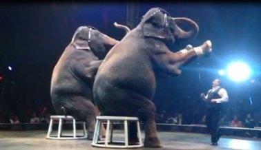 Los 8 peores circos