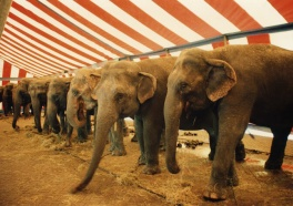 Victory! Doors Slammed Shut on Elephant Acts in Two Cities