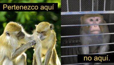 Terror, Dolor y Secuestro: 10 Cosas Terribles que los Monos Enfrentan Este Año