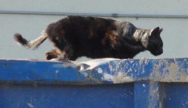 Imágenes fuertes: Los gatos sufren cuando los refugios dejan de albergarlos.