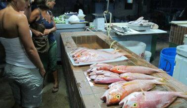 ¿Hay Parásitos en tu Comida? ¡Deja el Pescado Antes de que tu Comida te Coma a Ti!
