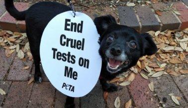 PETA arranca la Semana Mundial de Animales en Laboratorios con provocativas protestas