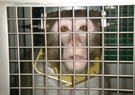 14 Eye-Opening Photos of Animals in Labs