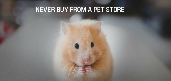 Hamster Peta Shareable 602x399 1