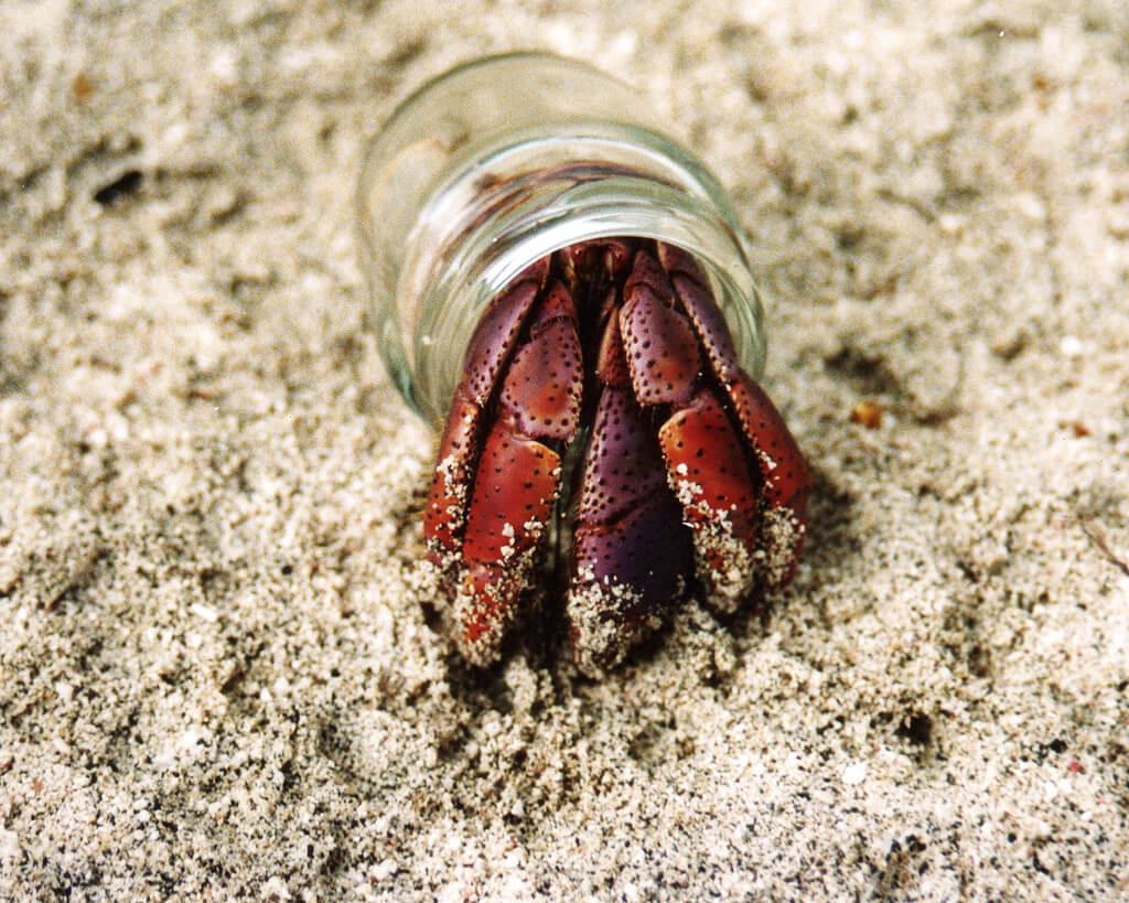 7 razones por las que nunca debes comprar un cangrejo ermitaño ...