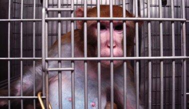 Escaldados, Ahogados, Deshidratados: La Incompetencia Mata Animales en OSHU