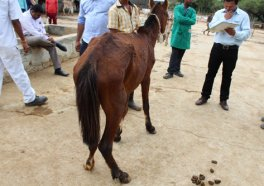 PETA International Science Consortium Funds Research to End Horse Experiments
