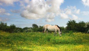 9 Fotos que harán que NUNCA te subas a un carruaje tirado por caballos