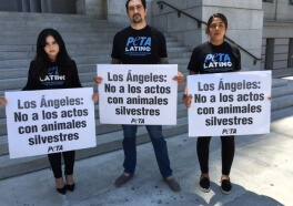 Rallying Call: Los Angeles Needs to Ban Wild Animals in Circuses