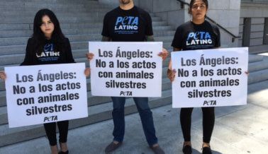 Llamamiento: Los Ángeles necesita prohibir los circos con animales silvestres