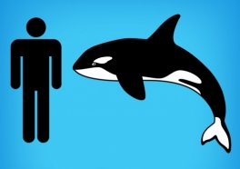 """Go Underwater With PETA's New Virtual Reality Experience, """"I, Orca"""""""