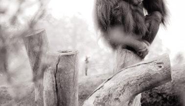21 imágenes que con seguridad van a IMPEDIR que visites zoológicos
