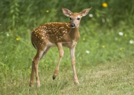 9 Things No One Told You About Hunting
