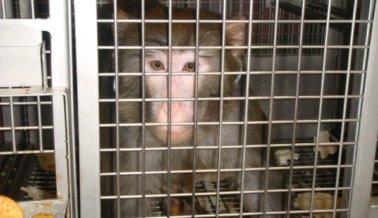 7 Formas de ayudar a los animales que sufren en experimentos