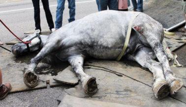 Carruaje halado por caballos deja un rastro de sangre en las calles de Charleston