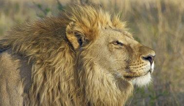 Madrid Prohíbe los Circos con Animales Silvestres