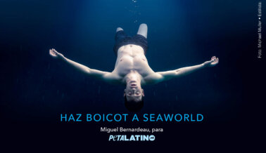 PETA 'Mató' a Miguel Bernardeau de 'Élite' Para el Anuncio Anti-SeaWorld