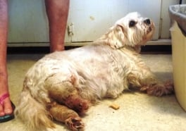 GRAPHIC: This Dog DIED Because He Wasn't Groomed