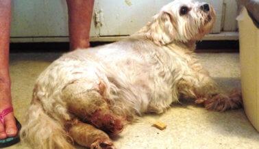 IMAGEN FUERTE: Este perro murió porque no lo aseaban