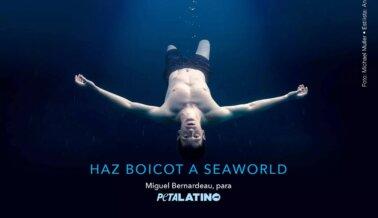 Estas Celebridades se Unieron a PETA Latino Para Expresarse en Contra de SeaWorld