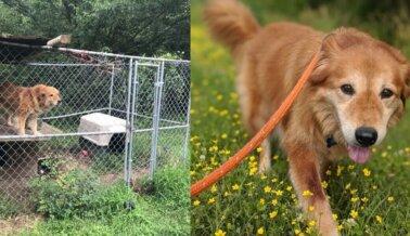 Después de Más de 7 Años en una Perrera de Malla, Mingo Vive el Mejor Momento de su Vida