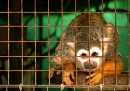 Por qué TÚ NO debes apoyar a los zoológicos