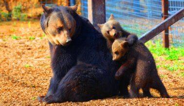 PETA ya ha rescatado a 60 osos de jaulas diminutas e infiernos de concreto
