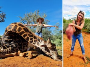 Trophy Hunter posing with dead giraffe and heart