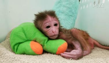 La Depravada Carrera de Ned Kalin, el Torturador de Monos