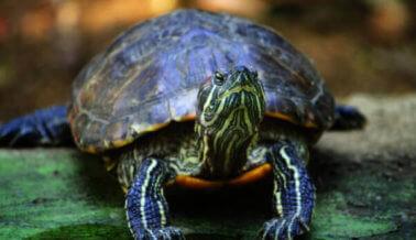 Operación encubierta de PETA lleva a comerciante de tortugas silvestres a la corte