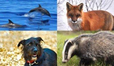 SeaWorld Pierde; se Prohíben las Brochas de Pelo de Tejón, PETA Continúa Ganando por los Animales