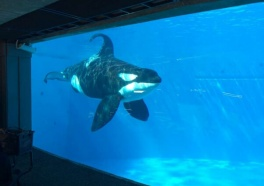 Tell the San Diego Bowl Game Association That There's Nothing Sporting About SeaWorld!