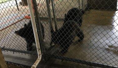Oswald's Bear Ranch: Deshonesto, Disfuncional y Ahora Blanco de Agencia Federal