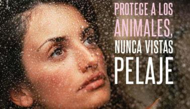 PROTEGE A LOS ANIMALES, NUNCA VISTAS PELAJE
