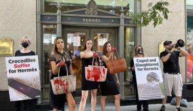 PETA y Agrupaciones de Derechos Animales de Todo el Mundo Decididos a ir por Hermès