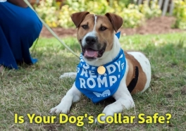 ¿Es peligroso el collar de tu perro?