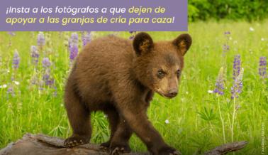 Pídeles a los Fotógrafos que Dejen de Explotar a la Vida Silvestre por Fotos Fingidas