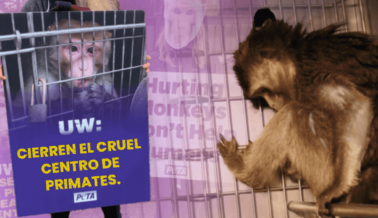 Exposé de PETA: Desechos Tóxicos, Enfermedades y Monos Muertos en las Instalaciones con Monos de UW