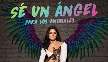 Aislinn Derbez: 'Sé un Ángel Para Los Animales, Esteriliza Siempre'