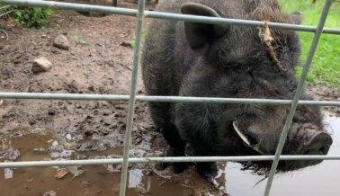 Tras Alerta de PETA, Animal Haven Zoo Es Citado por Múltiples Violaciones al Bienestar Animal